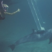 me and dolphin