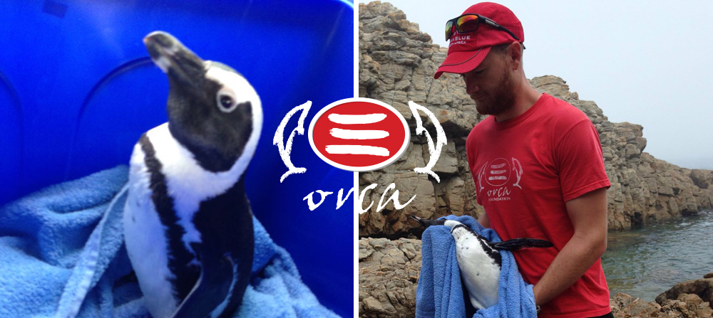 ORCA Foundation -Volunteer program 2018