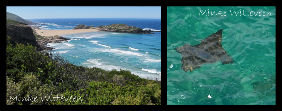 One of 24 – Plettenberg Bay's Marine Protected Area