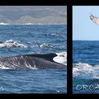 ORCA_foundation_South_africa