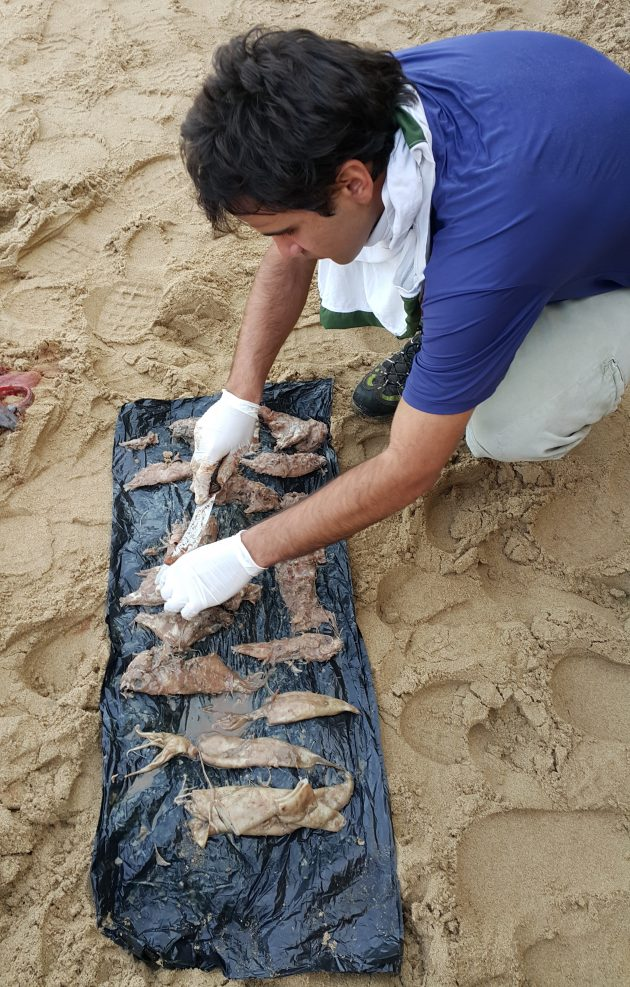 August Sorting through the stomach contents of the stranded Bottlenose Dolphin