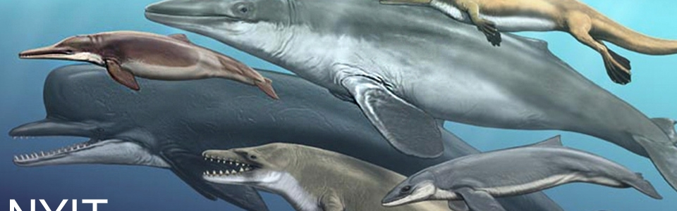 The origins of marine mammals