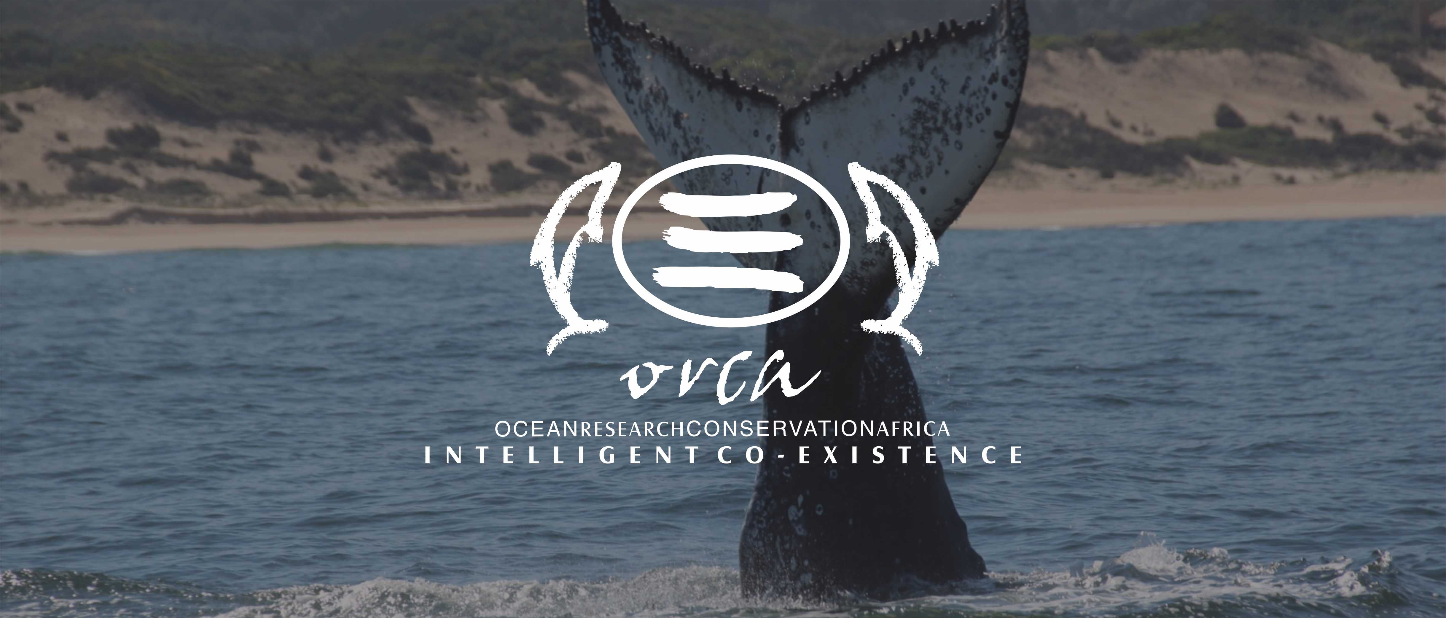 ORCA Foundation -Volunteer Programme 2019